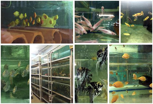 База Золотая рыбка